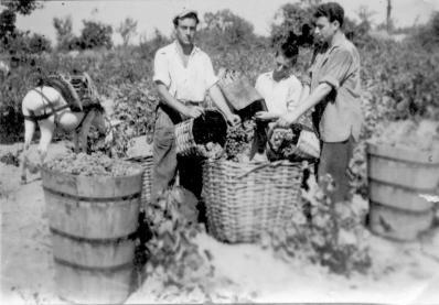 winebees_τρύγος στο παρελθόν
