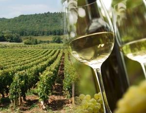 vin-bourgogne-vigne1